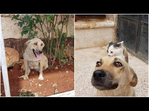 Dog Who Lost Her Pups Meets Orphan Kitten and Becomes The Pup She Never Had