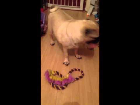 Keetarose mum and pups play time