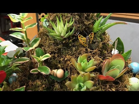 Making It Grow -  How to Create Topiaries with Succulents