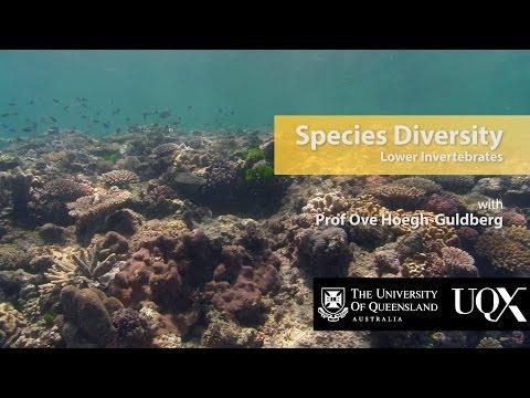UQx TROPIC101x 2.1.2 Species Diversity: Lower invertebrates