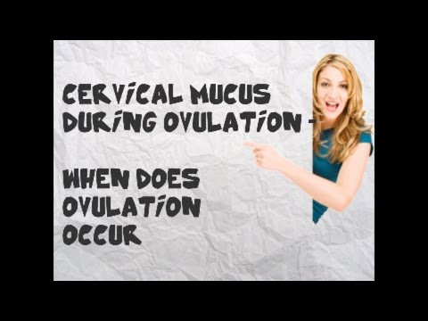 Fertile Cervical Mucus During Ovulation | What does Ovulation  look like - When does ovulation occur