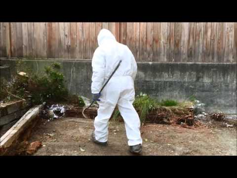 Attack of the Killer Bees How to Remove Them