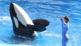 SeaWorld: Killer whale shows controversy and more - Compilation