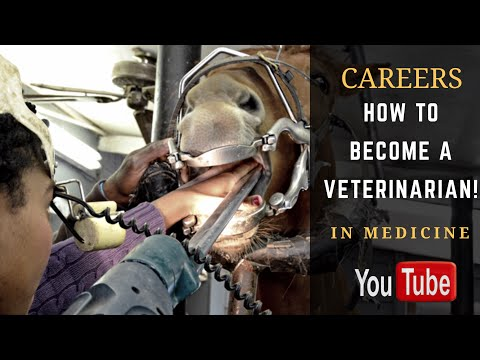 How to Become a Veterinarian! Typical Day in the Life of a Veterinarian!