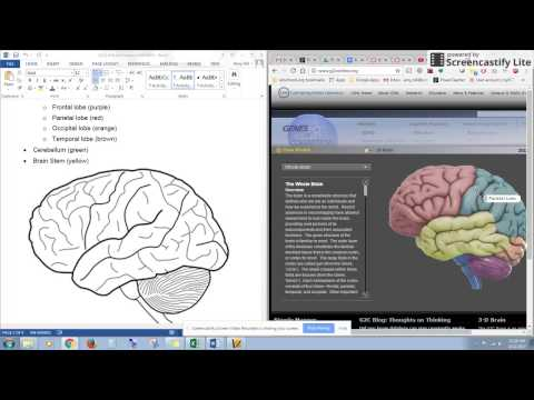 How to draw shapes using Microsoft Word to label your brain picture