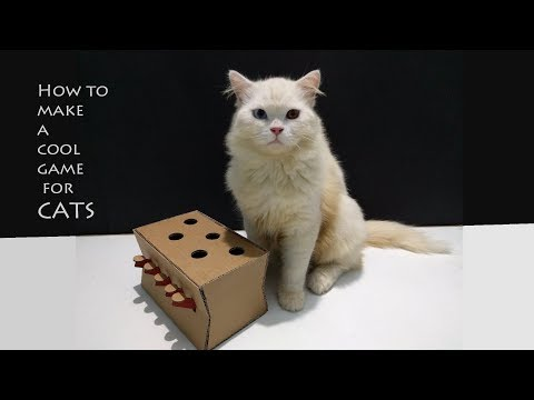 How to make a Amazing Cat Toy from Cardboard | DIY cat toy