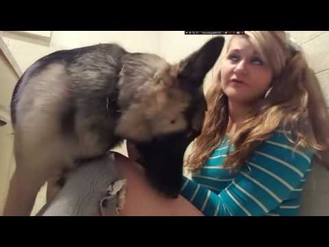 whitney wisconsin licked by dog