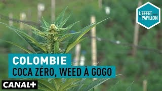 Coca zéro, weed à gogo - L'Effet Papillon – CANAL+