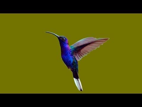 make a hummingbird feeder in 60 SECONDS  works wonderful