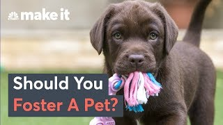 Should You Foster A Pet To Manage Stress?