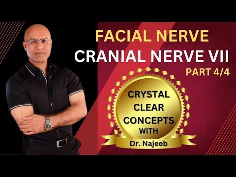 Facial Nerve - Neuroanatomy - Part 4/4