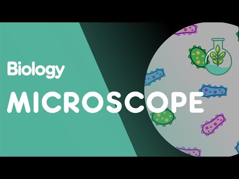 How to use a Microscope | Biology for All | FuseSchool