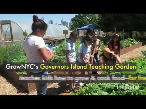 Inspiring urban farm teaches kids how to grow organic food on an NYC island