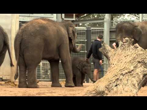Maths: Make your career count - Zoo Keeper