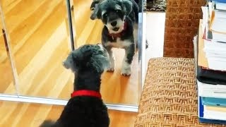 Dogs vs. Mirrors 🐶 Funny Dogs Reaction With Mirrors (Part 1) [Funny Pets]