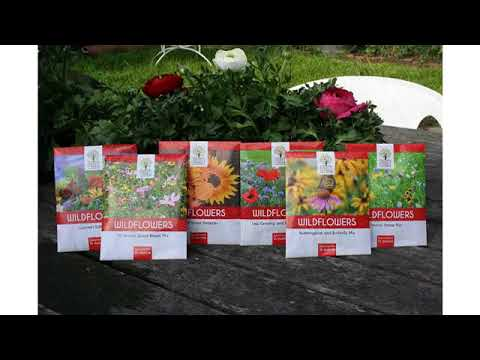 Must See Review! Wildflower Seeds Butterfly and Humming Bird Mix - Large 1 Ounce Packet 7,000+ Se..