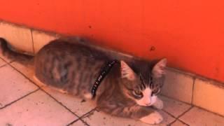 Il Mio Gattino Di 3 Mesi: Cielo