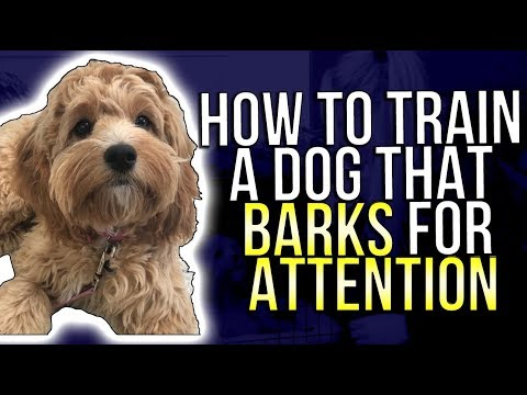 HOW TO TRAIN A DOG THAT BARKS FOR ATTENTION