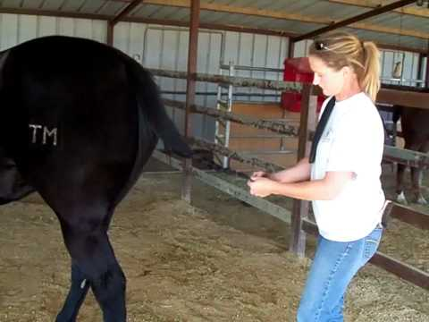 Tail Bags Dress Your Horse In Happy Tails Tail Bags In 3 Minutes