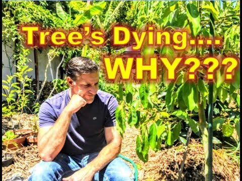 My Tree Is Dying.... Yet, I Did Everything Right ???