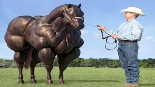 10 Horse Breeds You Will Not Believe Exist