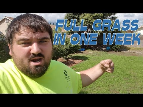 FULL YARD OF GRASS IN ONE WEEK | ARIZONA | GROWING BERMUDA GRASS | WEEK 2