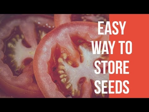 how to store tomato seeds for next year