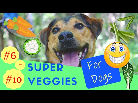#6 - #10 Super Veggies for Dogs