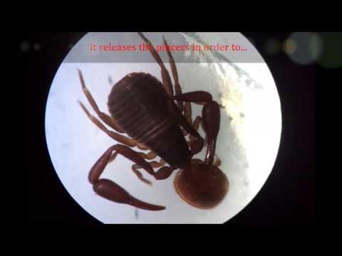 Varroa control / beenature-project