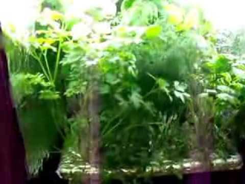 hydroponic herb garden -  indoor hydroponic kitchen herb garden