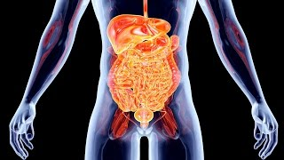 Top 10 Facts You Didn't Know About Your Body