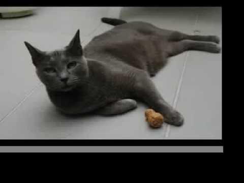 Vote Misha for NZ's Next Top Cat Model