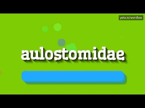 AULOSTOMIDAE - HOW TO PRONOUNCE IT!?