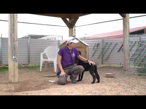 Training Tip Tuesday - How to get dogs to stop peeing when excited
