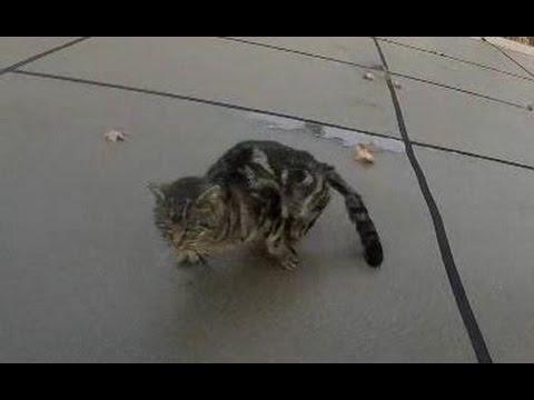 Injured stray cat ....