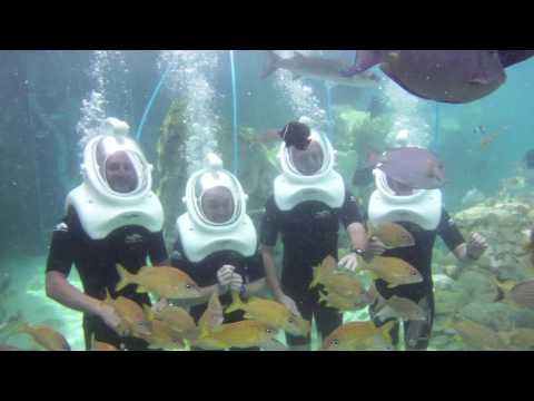 SeaVenture at Discovery Cove | SeaWorld Orlando