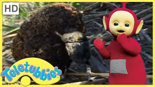 ★Teletubbies Everywhere ★ English Episodes ★ Dung Beetles (South Africa) ★ Full Episode (S02E29)