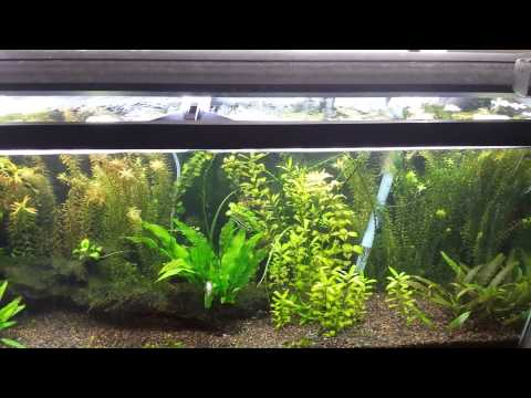 Reviving My Planted Tank