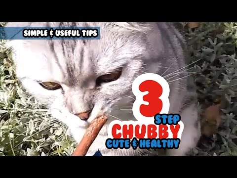 3 EASY STEP To Make Your Cat More CHUBBY, CUTE &  HEALTHY