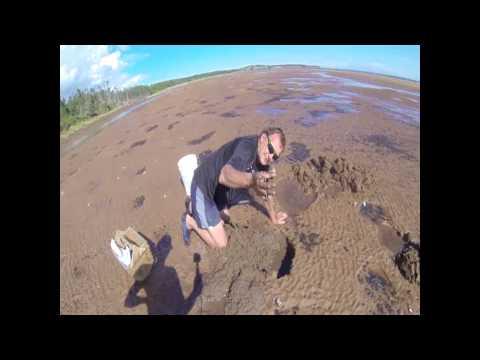 PEI Clam Digging