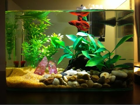 SIMPLE FISH TANK SETUP!