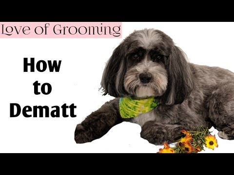 How to Demat (untangle) a Dogs Tail | Dematting a Dog