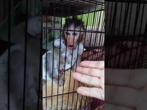 My baby monkey Dora cry so noisy