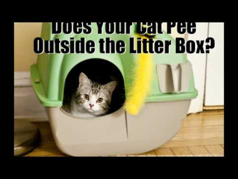 How to Stop Your Cat Peeing Outside the Litter Box