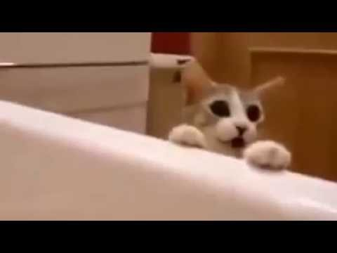 Cat sees owner
