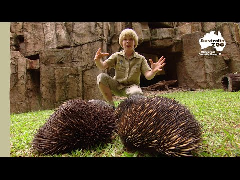 Robert Irwin's Australia Zoo tour