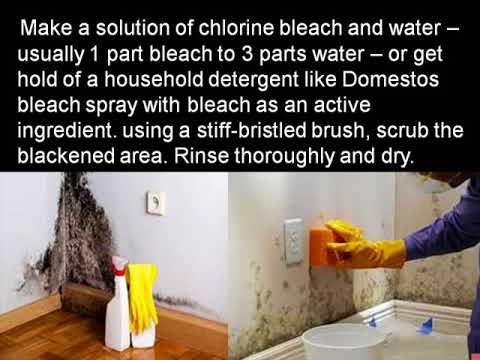 best way to get rid of mold in bedroom