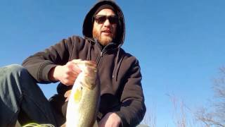 Z Man Chaterbait Bass Fishing