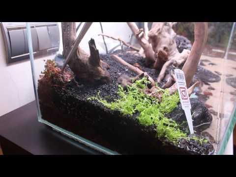 Montaje acuario plantado desde cero / Aquascaping parte 2