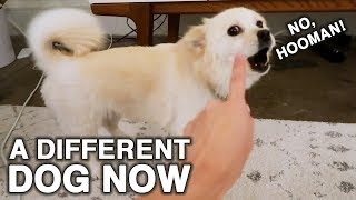 Not The Dog We Saw at the Shelter! | WahlieTV EP529